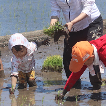 イメージ:米づくり体験教室